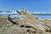 Spitsbergen - driftwood ,akes this fine landscape even more photogenic.  Here on Prins Karls Forland.