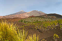Tenerife - look out from the TF-38 onto the volcanoes of Pico Viejo and Pico del Teide.