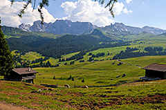 hier the Seiser Alm, the largest pasture area in the European Alps - a true flower-paradise!